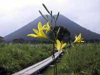 榛名山のユウスゲ・写真