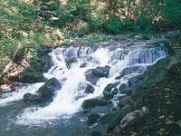 魚止の滝・写真