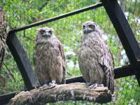 釧路市動物園・写真