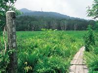 玉原湿原・写真