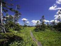 びふか松山湿原・写真