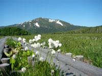 尾瀬国立公園・写真
