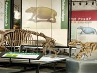 足寄動物化石博物館・写真