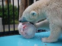 おびひろ動物園・写真