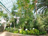 函館市 熱帯植物園
