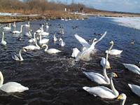公益財団法人 日本野鳥の会ウトナイ湖サンクチュアリ・写真