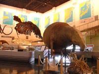 滝川市美術 自然史館