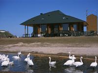 大沼野鳥観察館・写真