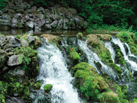 羊蹄のふきだし湧水・写真