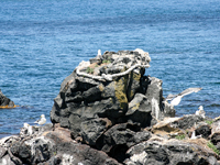 人面岩・寝熊の岩・写真
