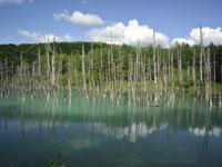 美瑛 青い池・写真
