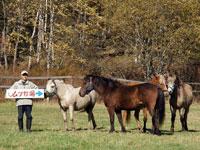 ムツ牧場 日だまり乗馬クラブ・写真