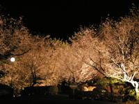 城峯公園・写真