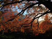 清泰山西善寺(札所8番)・写真