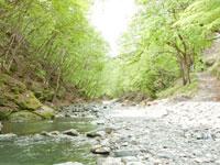 トラウトオン!入川(入川渓流観光釣場)・写真