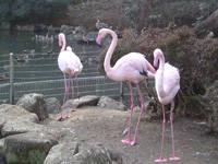 狭山市立智光山公園こども動物園・写真