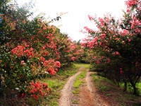 旅名観光農園フルーツ村・写真