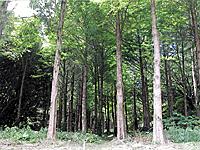 県立館山野鳥の森