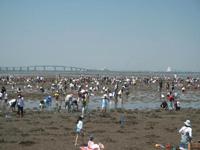 牛込海岸 潮干狩り・写真