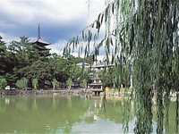 猿沢池・写真