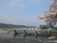 羽村の堰・写真