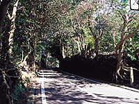 椿トンネル・写真