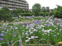 堀切菖蒲園・写真