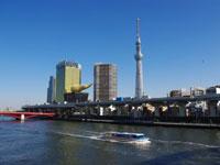 東京水辺ライン「カワセミ」