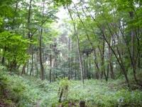 蓑毛自然観察の森・写真