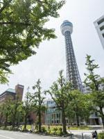 横浜マリンタワー・写真