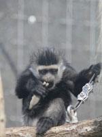 よこはま動物園ズーラシア・写真