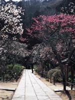東慶寺・写真