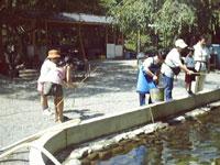 遊魚園・写真