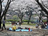 上大島キャンプ場・写真