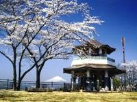 弘法山公園のサクラ・写真