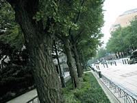 日本大通り・写真