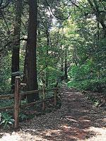 お林遊歩道・写真