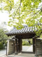 浄光明寺のヒガンバナ・スイセン