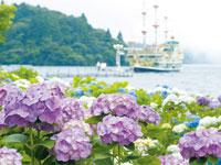 元箱根港湖畔沿いのあじさい