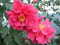 富山県中央植物園・写真