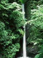 岩室の滝・写真