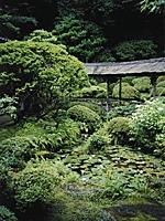 光久寺の茶庭・写真
