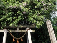 藤波神社社叢・写真