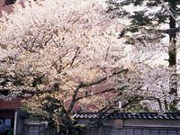 松月寺・写真