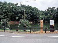 真菰ヶ池・写真