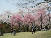 樹木公園・写真