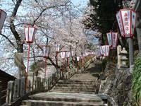 金崎宮の桜・写真