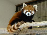 鯖江市西山動物園・写真