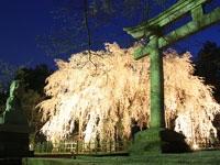 足羽神社・写真