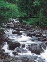 大柳川渓谷・写真